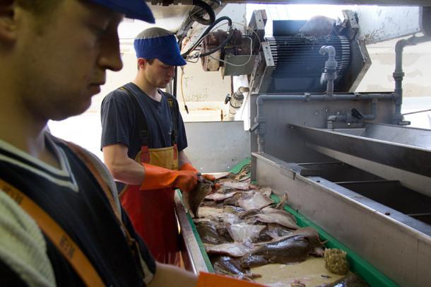 Rund 500 Millionen Menschen arbeiten in der Fischereiwirtschaft - und leiden ebenfalls unter den Misständen (Quelle: Torsten Schäfer)