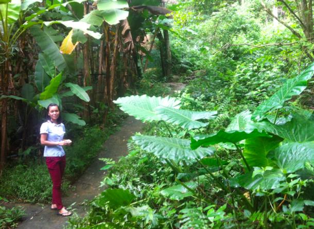 Eine Biologin führt uns durch den Garten der Forschungsstation Me Linh Station am Rande deas Tam Dao-Parks